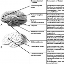 image of brain areas related to wisdom